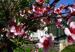 Oferta Viaje Hotel Villas Aldeaduero Complejo Turismo Rural