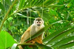Oferta Viaje Hotel Viaje Costa Rica del Caribe al Pacífico desde Madrid