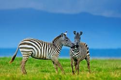 Oferta Viaje Hotel Viaje Kenia, Safari Haraka