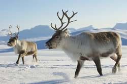 Oferta Viaje Hotel Viaje Reyes en Laponia - Salla