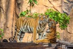Oferta Viaje Hotel Viaje India Exótica y Ranthambore