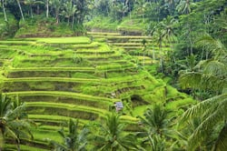 Oferta Viaje Hotel Viaje Bali: Circuito para Novios