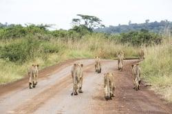 Oferta Viaje Hotel Viaje Safari Esencias de Kenia + Extensión Zanzibar