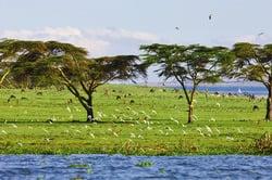Oferta Viaje Hotel Viaje Kenia, Safari Samburu