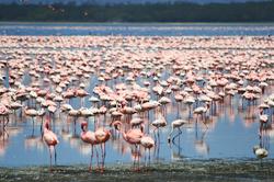 Oferta Viaje Hotel Viaje Kenia, Safari Kuvutia