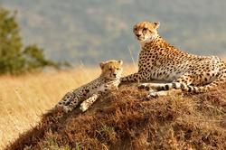 Oferta Viaje Hotel Viaje Kenia, Safari Kiboko