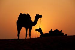 Oferta Viaje Hotel Viaje Fin de Año en Marruecos - Especial Singles