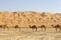 Oferta Viaje Hotel Viaje Marruecos, Escapada al Desierto