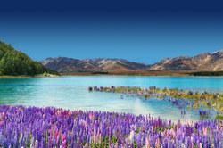 Oferta Viaje Hotel Viaje Nueva Zelanda: Kia Ora