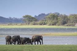 Oferta Viaje Hotel Viaje Sri Lanka a su Aire