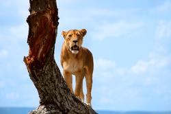 Oferta Viaje Hotel Viaje Safari en Tanzania y Playas de Zanzibar