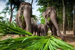 Oferta Viaje Hotel Viaje Tailandia Esencial y Camboya