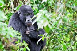 Oferta Viaje Hotel Viaje Parques de Uganda