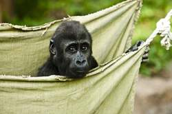 Oferta Viaje Hotel Viaje Congo, El Corazón de África