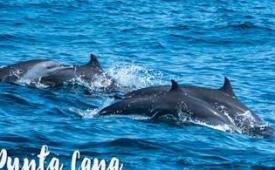 Oferta Viaje Hotel Dolphin Explorer