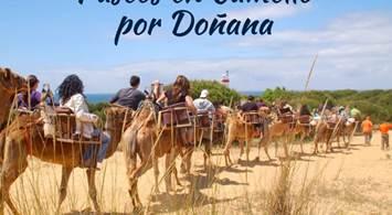 Oferta Viaje Hotel Paseos en Camello por Doñana