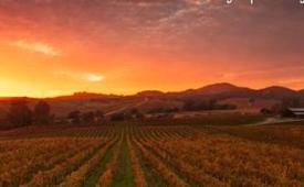 Oferta Viaje Hotel Excursion a los Viñedos de Sonoma y Napa Valley