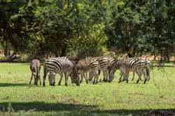Oferta Viaje Hotel Viaje Descubre Botsuana
