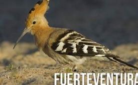 Oferta Viaje Hotel Fuerteventura - Senderismo y avistamiento de aves